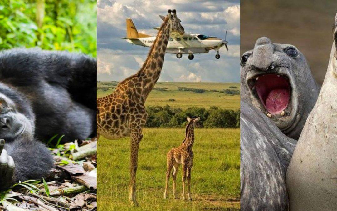 Comedy Wildlife Photo Awards: las mejores fotos cómicas de animales